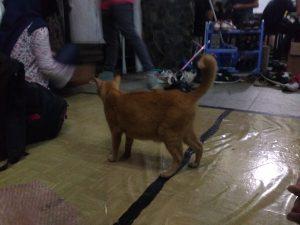 """kucing pun ikut syukwisan :"""""""")"""